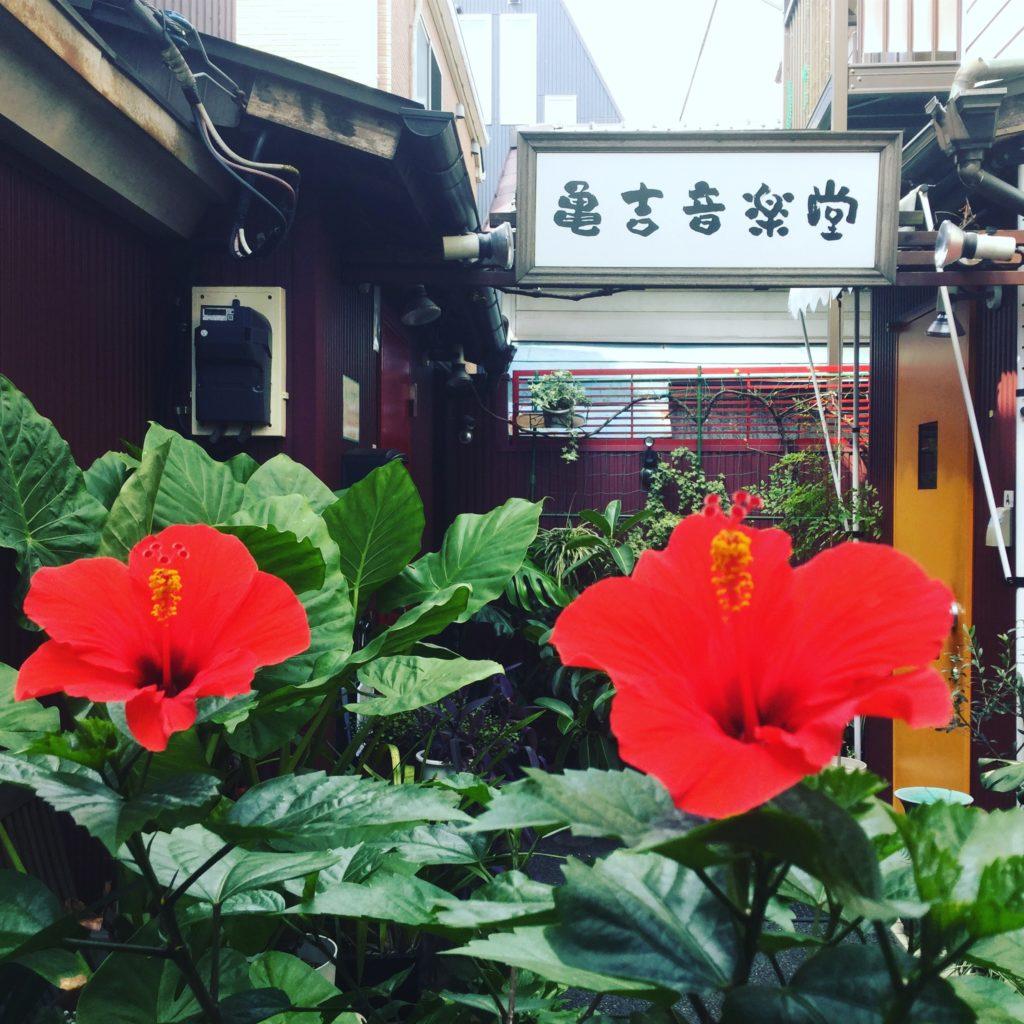 亀吉音楽堂の植物達